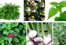 Φυσική καταπολέμηση ασθενειών εχθρών φυτών