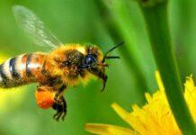 μέλισσες ανώτερη νοημοσύνη