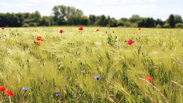 βιοδυναμική γεωργία