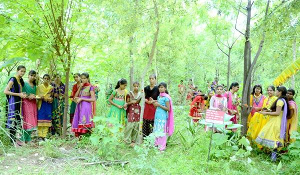 111 δέντρα για κάθε κορίτσι