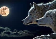Ινδιάνικοι Μύθοι | Οι δύο λύκοι
