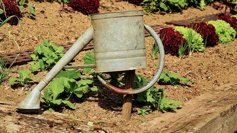 Εδαφοκάλυψη | Κατασκευή άνυδρου λαχανόκηπου