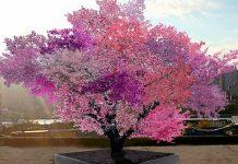 Το Δέντρο των 40 Ποικιλιών