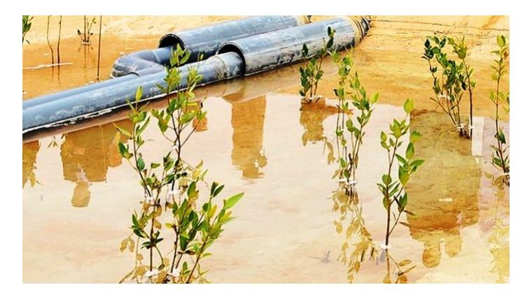 Υβριδική υδατοκαλλιέργεια παράγει ψάρια και βιοκαύσιμα στην έρημο