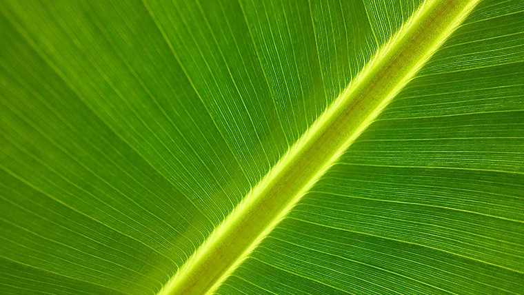 Βιοκαύσιμα με τεχνολογία αντίστροφης φωτοσύνθεσης