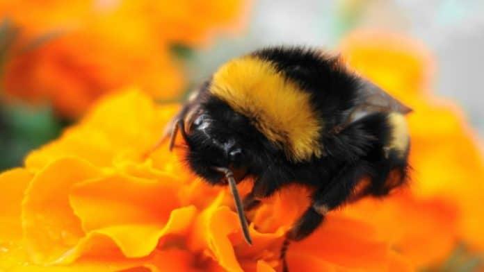 Συμβουλές για υγιείς μέλισσες | Ποια είναι τα κατάλληλα μελισσοκομικά είδη