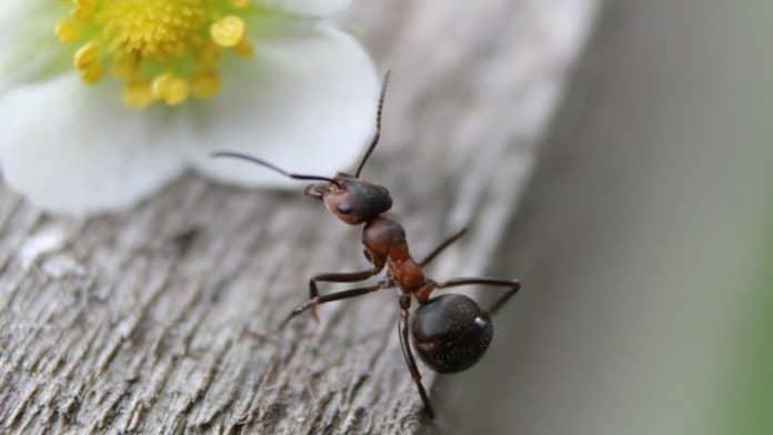 10 βήματα για να αποχαιρετίσετε τα μυρμήγκια από το σπίτι σας