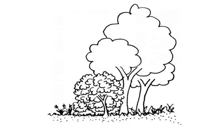 Δέντρα, δάση και ανεμοφράχτες