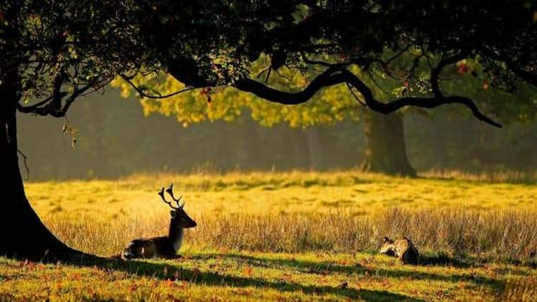 To 10% της άγριας φύσης έχει χαθεί