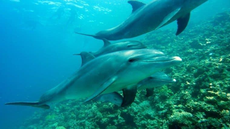 Κατέγραψαν δελφίνια να τα… λένε μεταξύ τους!