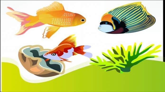 Τα ψάρια τραγουδούν μαζί το ξημέρωμα και το σούρουπο όπως τα πουλιά