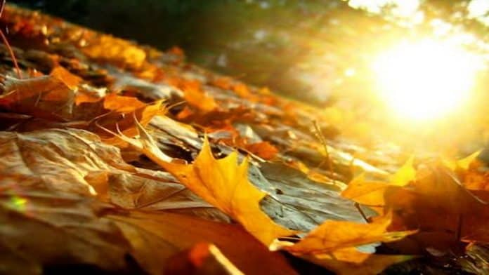 Φθινοπωρινή Τόνωση και Ενδυνάμωση