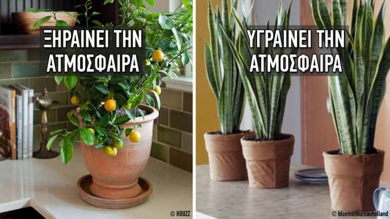 10 φυτά που δημιουργούν το ιδανικό κλίμα στο σπίτι σας
