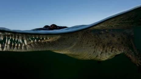 National Geographic | 15 υπέροχες φωτογραφίες αποτυπώνουν την ποίηση της φύσης 8