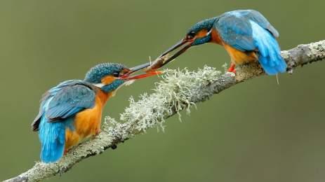 National Geographic | 15 υπέροχες φωτογραφίες αποτυπώνουν την ποίηση της φύσης 13