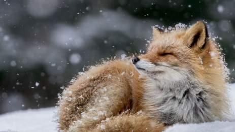 National Geographic | 15 υπέροχες φωτογραφίες αποτυπώνουν την ποίηση της φύσης 2