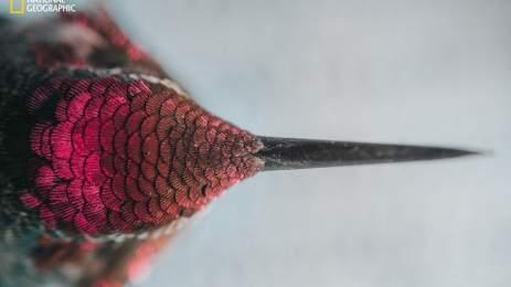 National Geographic | 15 υπέροχες φωτογραφίες αποτυπώνουν την ποίηση της φύσης 3