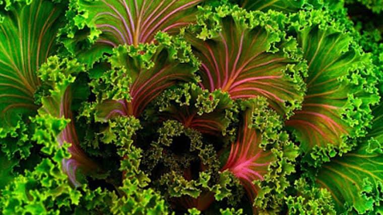 Γιατί τα βιολογικά τρόφιμα είναι καλύτερα