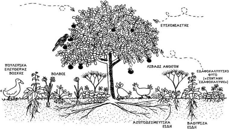 Το βρώσιμο δάσος | Ζώνη ΙΙ | Της Τίνας Λυμπέρη