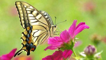 Σεμινάριο Μασάζ Άγγιγμα της Πεταλούδας της Δρος Εύας Ράιχ