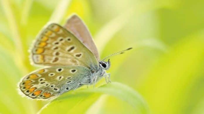 Ανοίγοντας στην αγάπη | Το ενεργειακό μασάζ Άγγιγμα της Πεταλούδας | Της Σοφίας Τσουμάκη