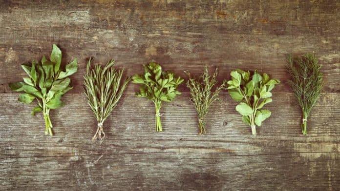 Αντιφλεγμονώδη βότανα από το «φαρμακείο της φύσης»