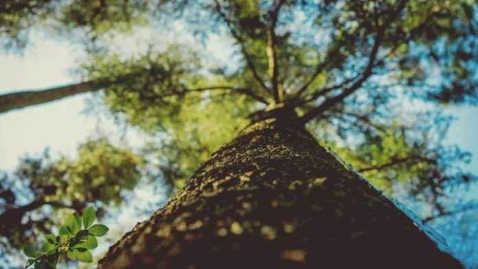 Φυσικές αισθήσεις | Ο θόρυβος ενός δέντρου που πέφτει - του Στράτου Λάσπα