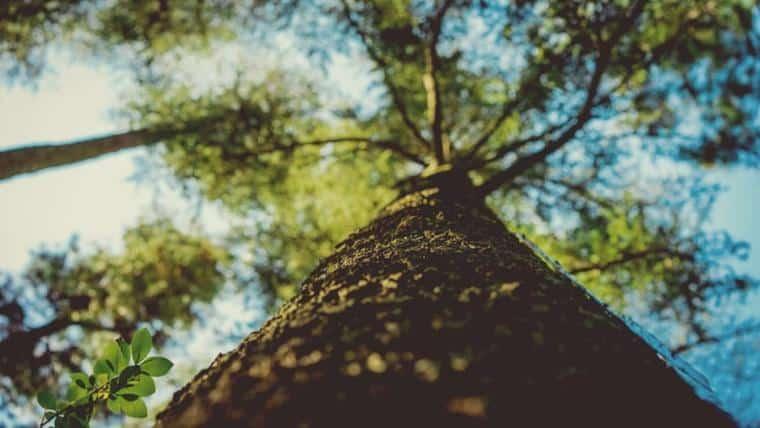Φυσικές αισθήσεις   Ο θόρυβος ενός δέντρου που πέφτει - του Στράτου Λάσπα