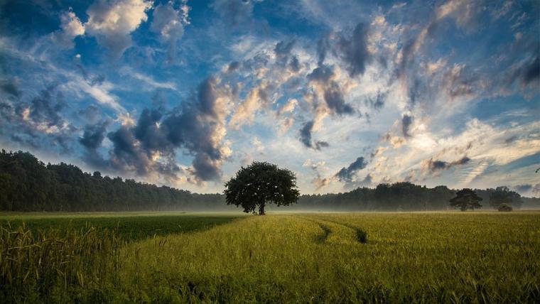 Φυσικές αισθήσεις | Ο θόρυβος ενός δέντρου που πέφτει | Του Στράτου Λάσπα