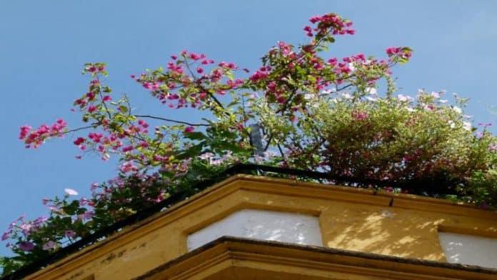 Γιατί να φτιάξετε «πράσινη στέγη» και ταρατσόκηπο
