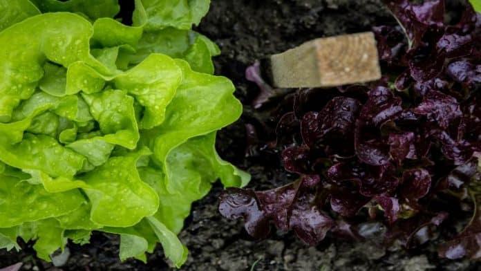Το καλάθι του γεωργού στο τραπέζι σας