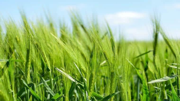 Προκήρυξη για τη βιολογική γεωργία και κτηνοτροφία