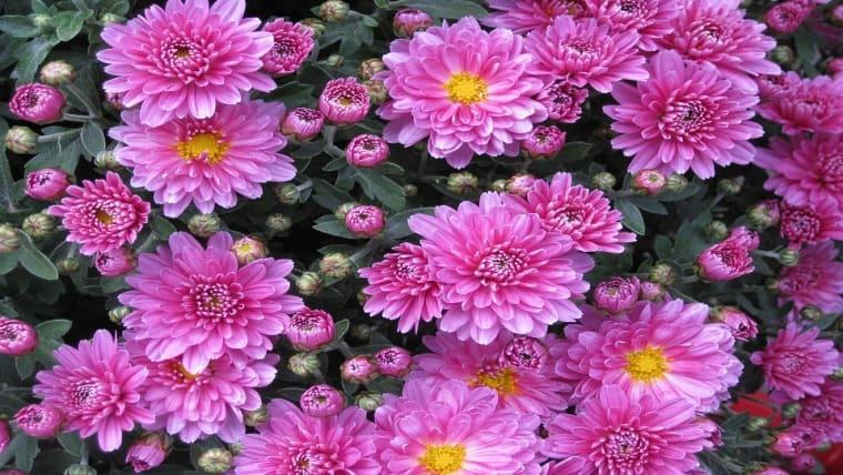 Τα φυτά που «καθαρίζουν» το σπίτι σας