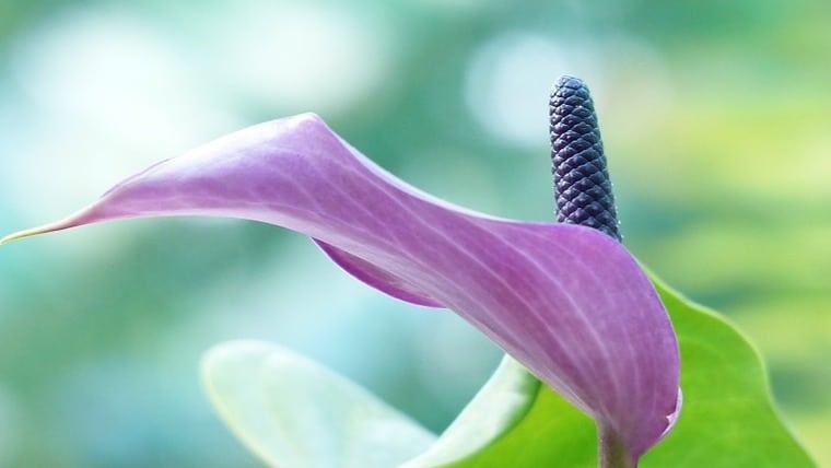 Τα φυτά που καθαρίζουν το σπίτι σας