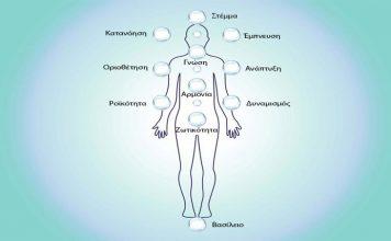 Το Ελληνικό Δέντρο της Ζωής και τα 11 Ενεργειακά Κέντρα του ανθρώπου   Του Στάμου Σίνη
