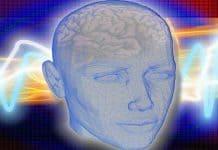 Νέα στοιχεία για τον σχηματισμό της μνήμης στον εγκέφαλο