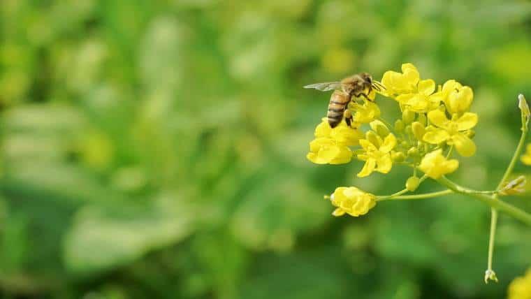 9 συμβουλές για να βοηθήσουμε τις μέλισσες