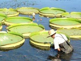 Κινέζικη αστρολογία | Μηνιαίες προβλέψεις Μαΐου