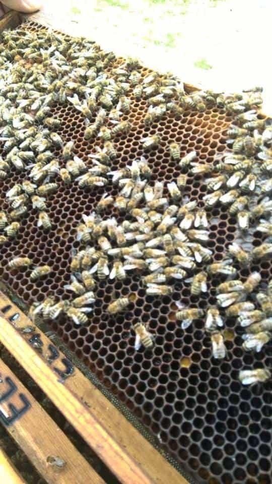 Μέλι, το γλυκό υγρό χρυσάφι - της Κατερίνας Σταθοπούλου