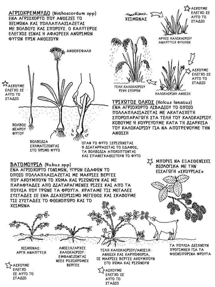 Τα αγριόχορτα * | Οι φύλακες του εδάφους - της Τίνας Λυμπέρη