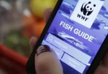 Fish Guide | O Οδηγός του WWF για υπεύθυνη «ψαροφαγία» ανανεώνεται!