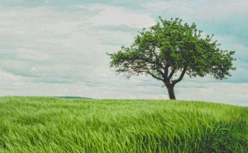 Το δέντρο των ευχών - Του Paramahansa Yogananda