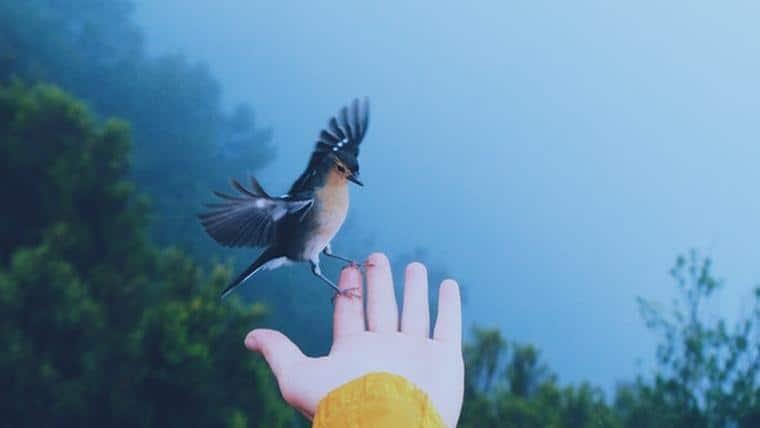 Σεβασμός του Ενός προς τον Άλλον και προς το Περιβάλλον - Του Robert Najemy