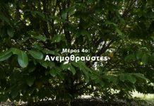 Η Φυσική Καλλιέργεια με τον Παναγιώτη Μανίκη | Μέρος 4ο | Ανεμοθραύστες