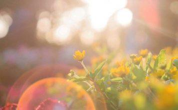 Γίνε Ήλιος, της Μαριάννας Χρυσικάκου