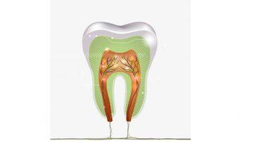 Το μήνυμα των δοντιών μας
