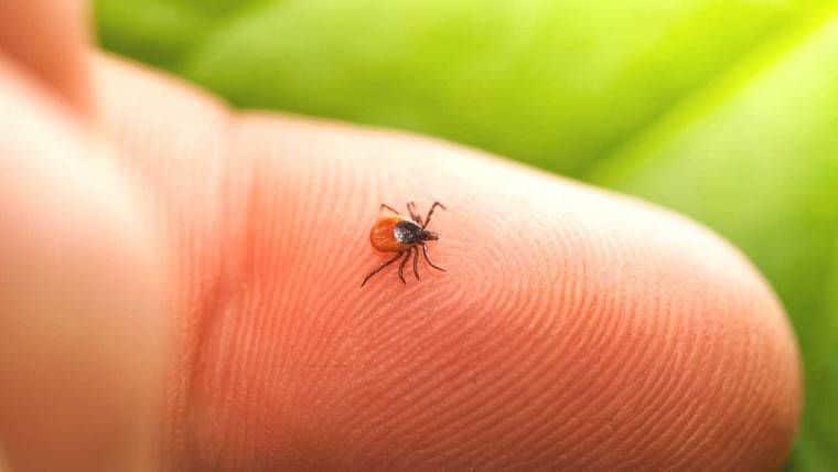 Νόσος του Lyme | Μπορρελίωση