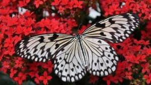 2019 | Το πέταγμα της Πεταλούδας