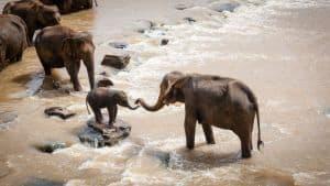 Γιατί οι ελέφαντες της Μοζαμβίκης γεννιούνται χωρίς χαυλιόδοντες;