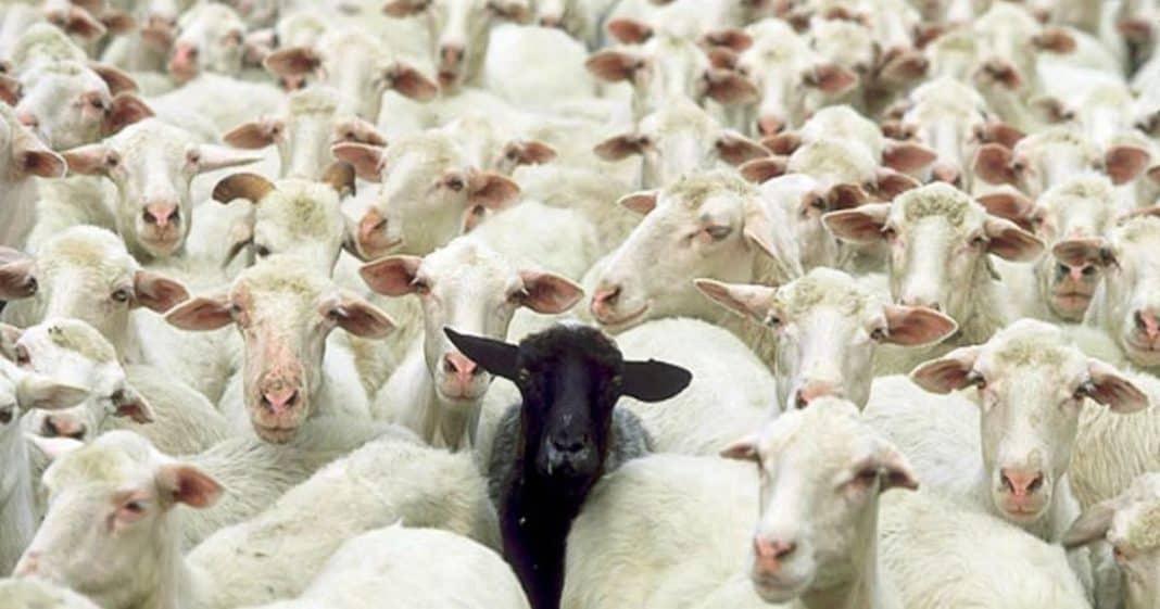 Μη σταματάς μαύρο πρόβατο